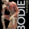 Thumbnail image for Bodies The Exhibition Visit